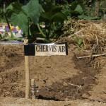 Semis de Chervis