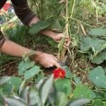 nettoyage des mauvaises herbes