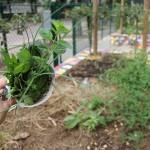 cornet d'herbes du jardin, bon dimanche!